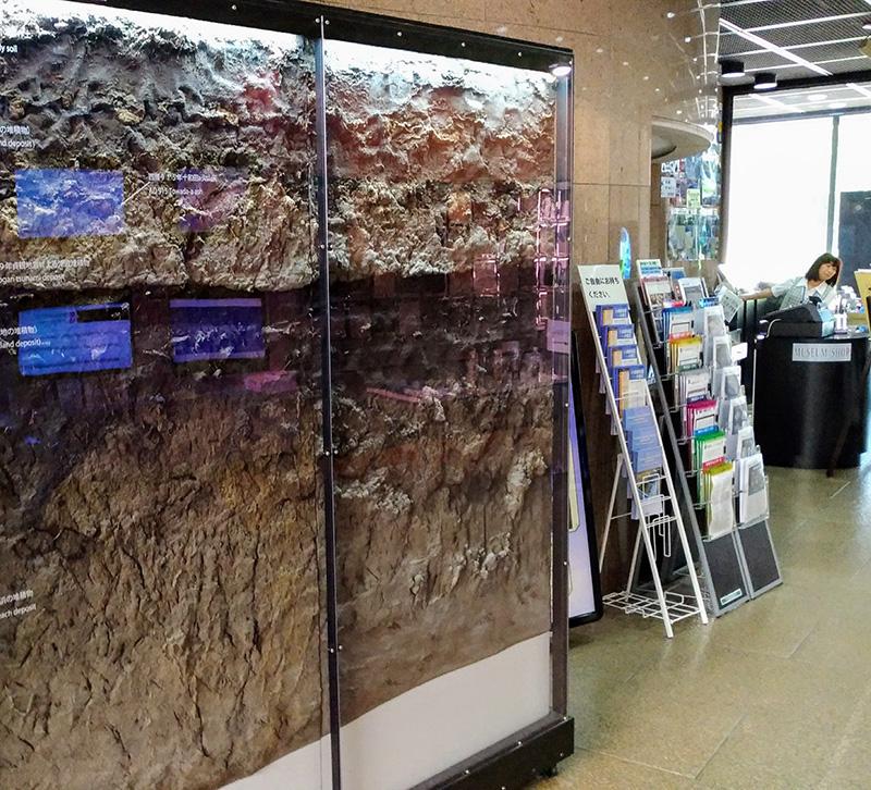 津波堆積物の写真説明ガラスケースの中に展示されている津波堆積物。仙台市若林区の田んぼから掘り出された。水平に広がる黒い沼地の土壌の上に、津波が運び込んだ白っぽい砂の層が載っている。869年の貞観地震が引き起こした津波による。茨城県つくば市の地質標本館で。